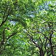 20130517 日比谷公園の緑2