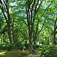 20130517 日比谷公園の緑1