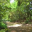 20130603 浜離宮庭園の緑1