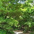 20130603 浜離宮庭園の緑3