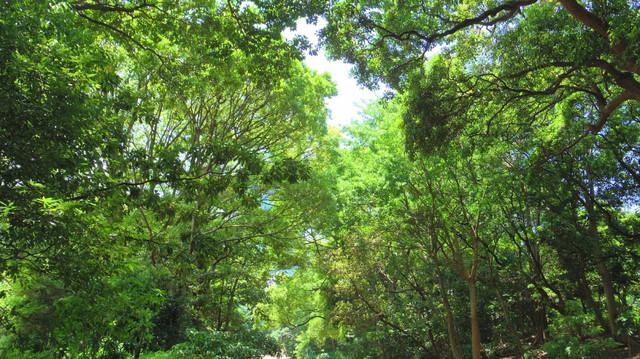 20130603 浜離宮庭園の緑2