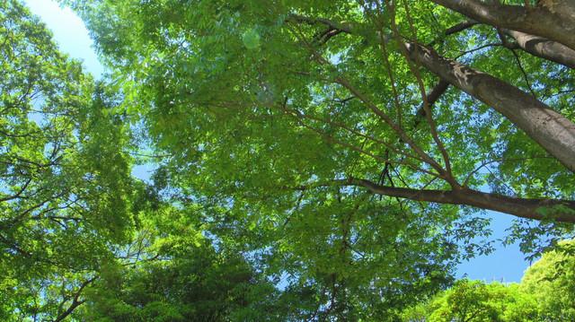 20130603 浜離宮庭園の緑4